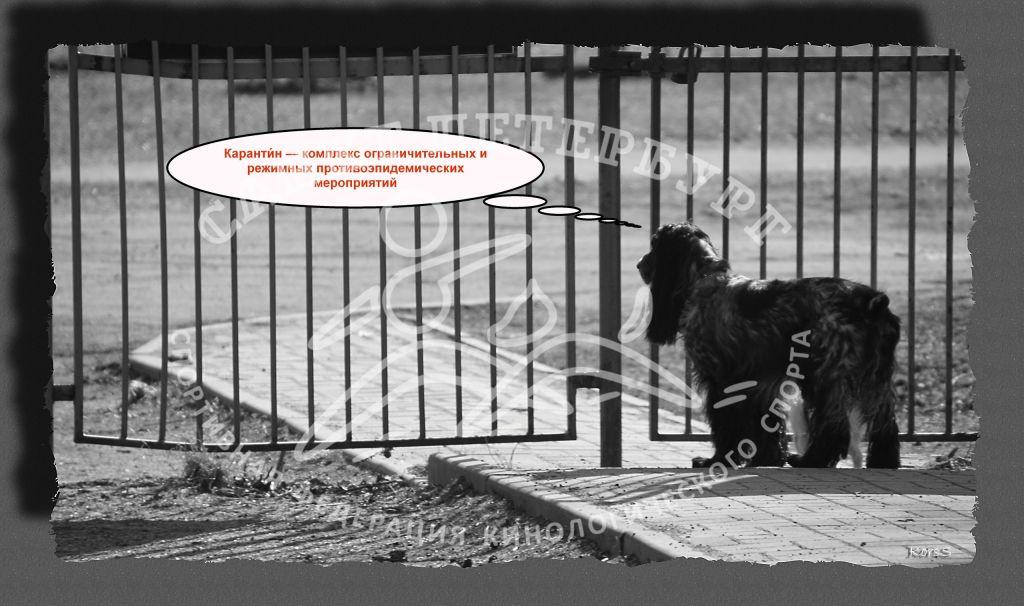 Русский охотничий спаниель объясняет значение слова карантин.