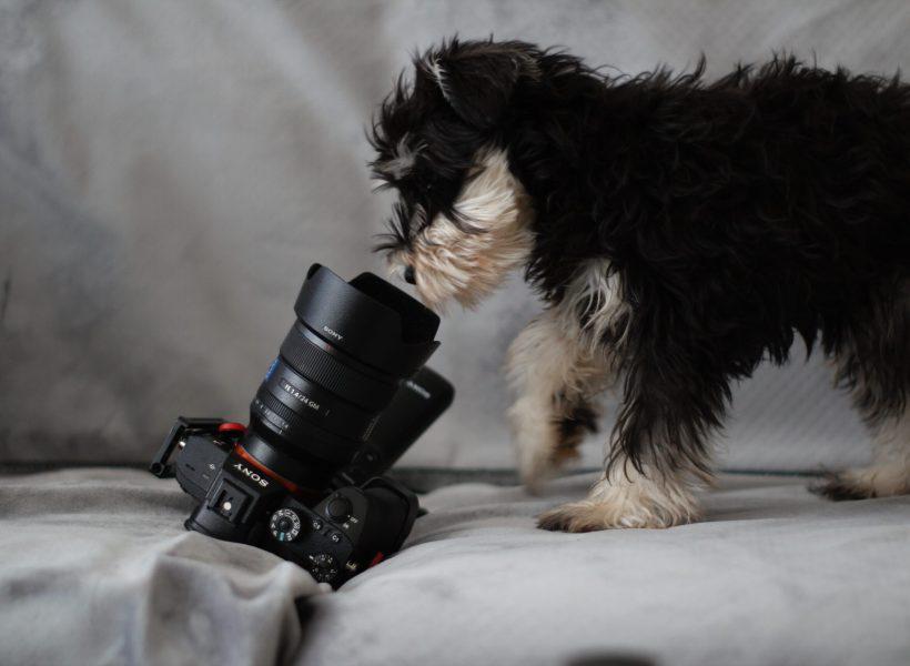 Щенок смотрит в обьектив фотоаппарата лежащего на светлой ткани экраном вниз