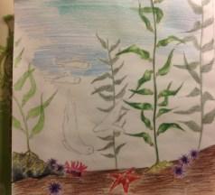 Kelp Forest Sketch