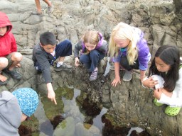 Ocean Explorers study life in the tide pools at Pebble Beach/Bean Hollow.