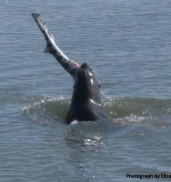 sea lion munch time liz [ 1708 x 1340 Pixel ]