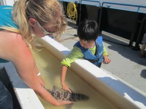 Touching a leopard shark that was caught in the fishing net