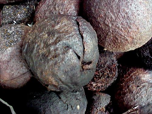 moldy-walnuts