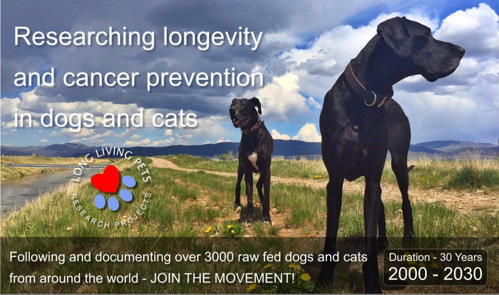 long-living-pets-website-main-banner-1