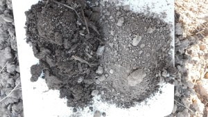 A sinistra terreno ricco di sostanza organica, a destra terreno argilloso povero di sostanza organica