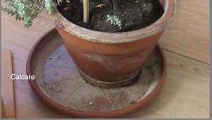 Il calcare viene filtrato dal materiale poroso del vaso e resta all'esterno
