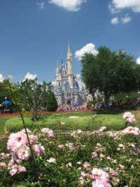 What can carpet cleaners learn from Disney? | Strategies ...