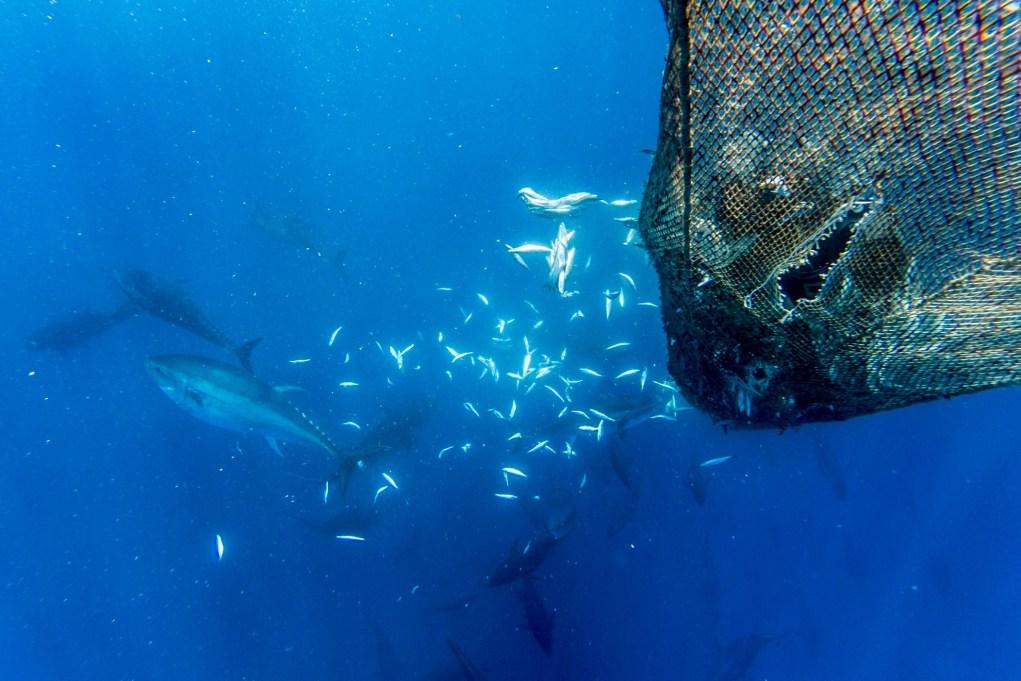 Swim with tuna
