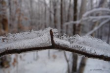 Twig with Ice and Snow Crystals