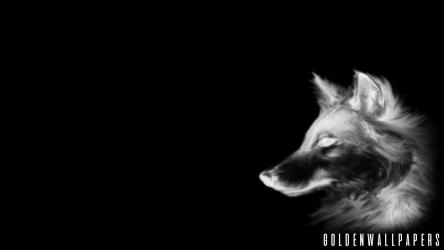 Black wolf wallpaper SF Wallpaper