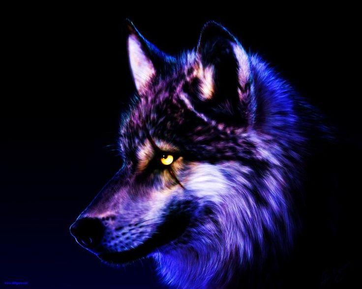 cool wolf wallpaper sf