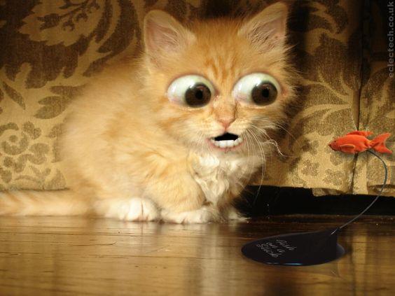 free cat screensavers and
