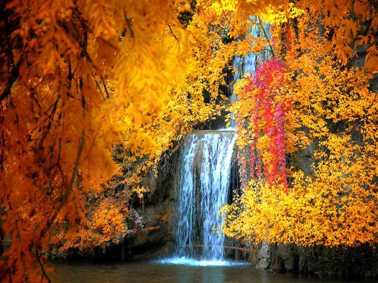 free fall screensavers wallpaper