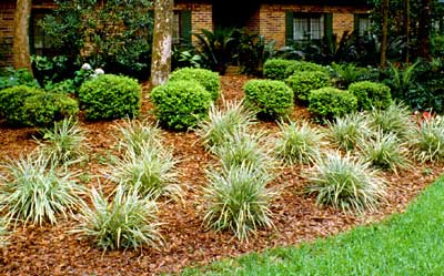 florida-friendly landscaping