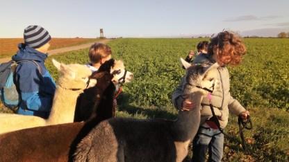 16.10.2019: Alte Freund*innen, neue Freund*innen: Die Klasse 6b auf der Alpaka-Farm