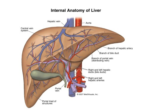 small resolution of the liver liver disease