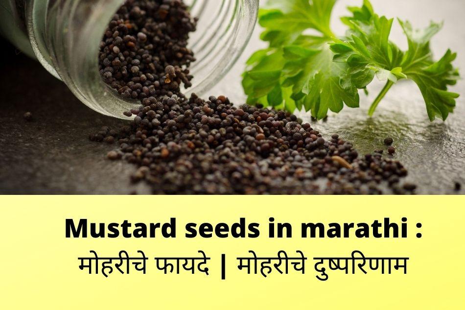 Mustard seeds in marathi
