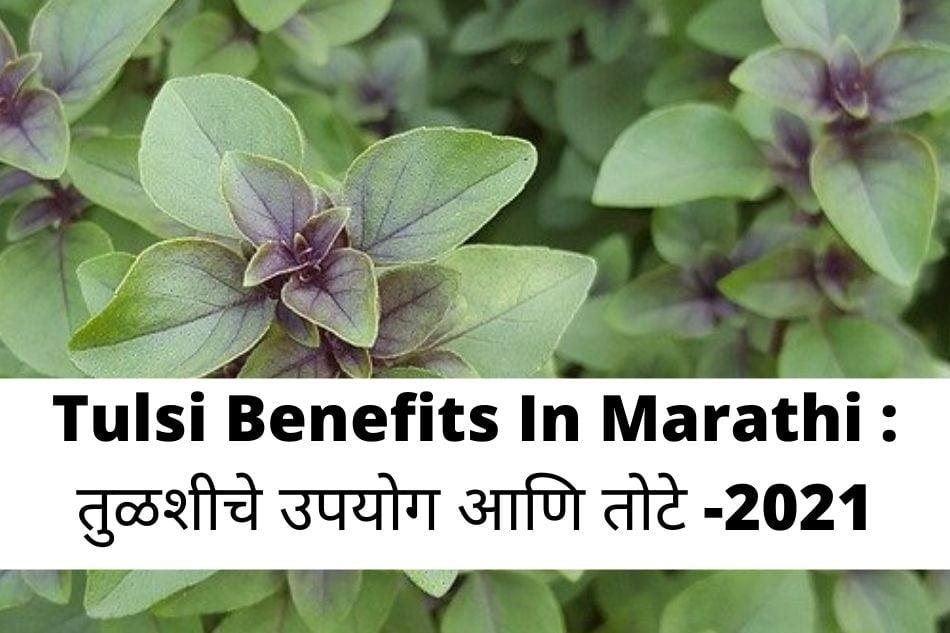 Tulsi Benefits In Marathi