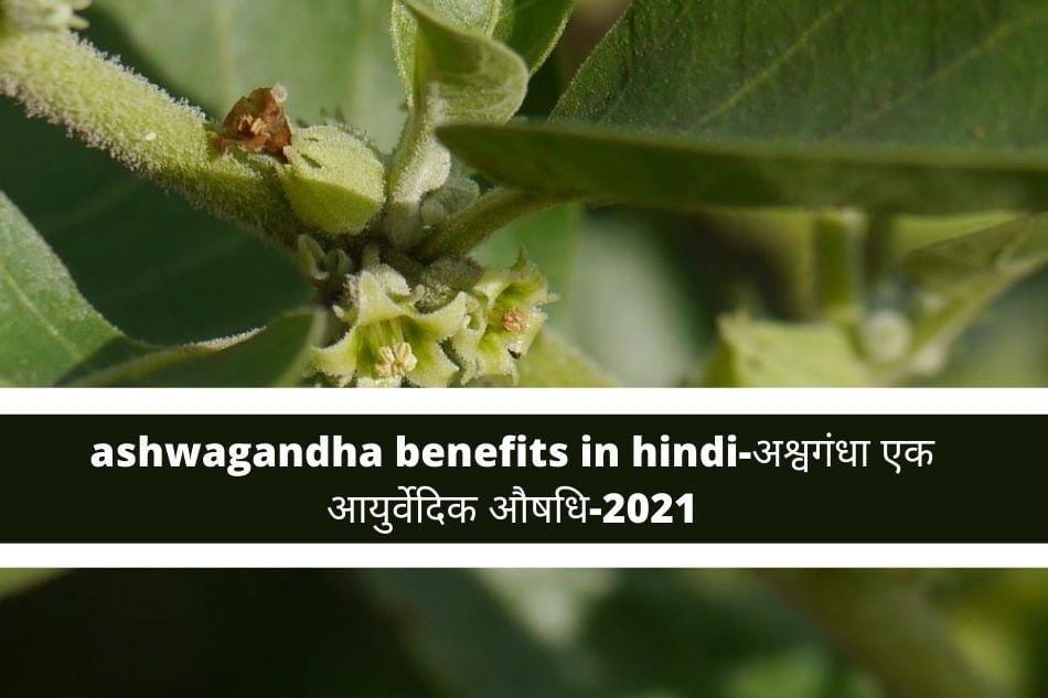 ashwagandha benefits in hindi-