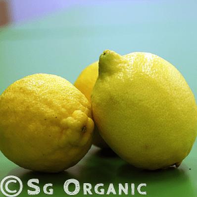 zingy organic lemon