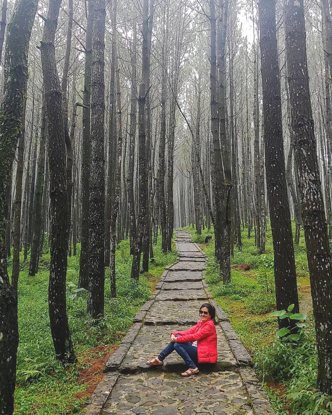 Hutan Pinus Eropa : hutan, pinus, eropa, Tempat, Wisata, Semarang, Bernuansa, Keren