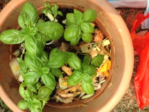 How to use and benefits of organic compost