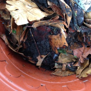 How to prepare compost bins for outdoor garden and what to do when compost is wet