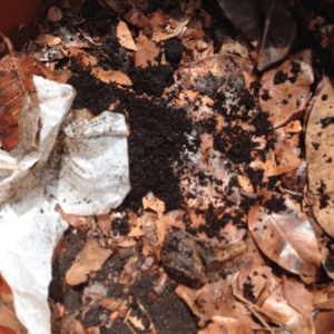 How to make organic compost