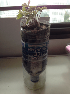 How to make self watering pots in 4 easy steps