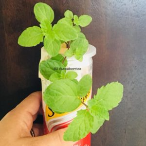 Propagate MINT from cutting