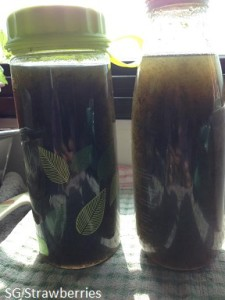 Home made seaweed or kelp fertilizer