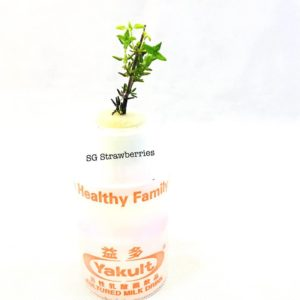 Grow fresh herbs indoors