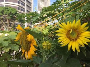 Singapore awesome gardeners