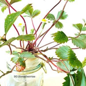 Tabletop fruits harvest