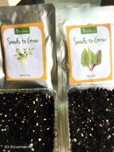 Grow microgreens from seeds