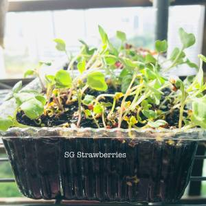 Grow Harvest Eat microgreens