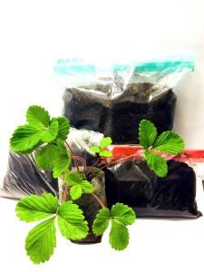 soil kit for strawberry