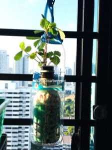 How to built hanging gardens