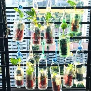 Creative PET bottles garden containers