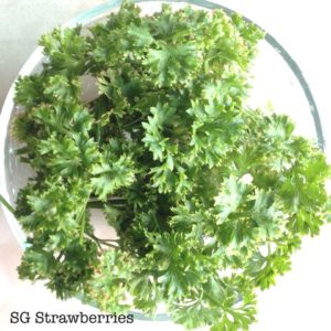 Grow Curly Parsley from seeds