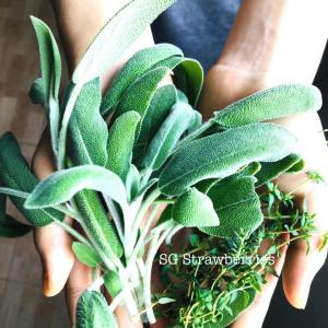 Grow Harvest Fresh Herbs indoors