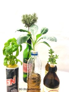 Grow and Harvest Vegetables and Herbs in door
