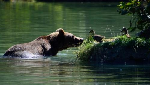 Alaska: strani incontri