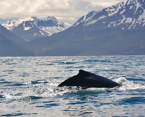 Islanda dorso balena con panorama