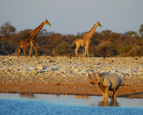 Namibia: Etosha NP. Paesaggi.