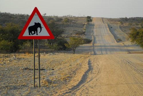 Namibia: attraversamento animali