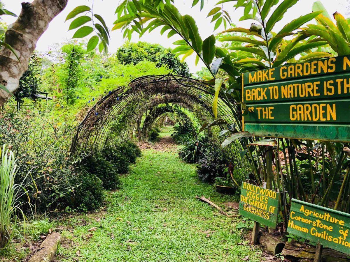 Bollywood Veggies Farm
