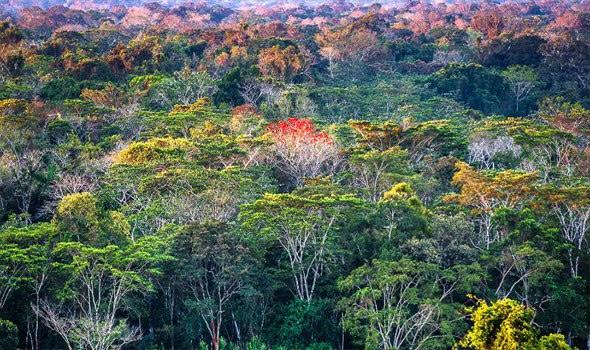 علماء الآثار يكتشفون شبكة مخفية من القرى في الأمازون مرتبة مثل واجهة الساعة