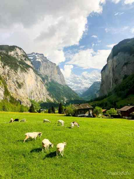 farm animals and green grass with houses and mountains with beautiful skies