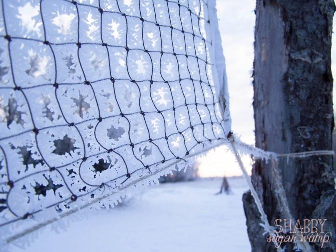 hoar frost2-2
